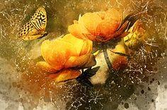Mariposa, Amarillo, Flores, Naturaleza