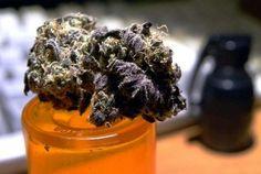 Mr Nice Guy marijuana strain review. Weedpad.com to the .. nah.. lol