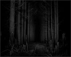 forest at night photography - Google Search