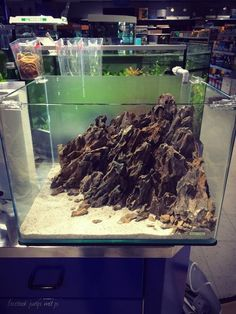aquascape iwagumi dragon stones - Google zoeken