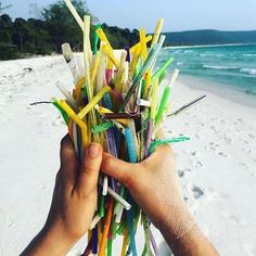Most of the sea animals see plastic straws as food Tilikum Orca, Opossum, Make A Change, Save The Planet, Biodegradable Products, Like4like, Plastic, Straws, Ocean