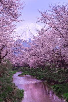 ずっと見たかった桜と富士山 運よく満開の日に訪れることができました あたたかな光を受けて富士山も春爛漫です *みなさまへ* たくさんのコメントやbravo!をいただき ありがとうごさいました(*^-^*) おかげで私の代表作になりました。 ひとりひとりに御礼が言えなくて 本当に申し訳ありませんm(__)m All Nature, Science And Nature, Amazing Nature, Beautiful Places To Visit, Wonderful Places, Beautiful World, Nature Pictures, Beautiful Pictures, Cherry Blossom Japan