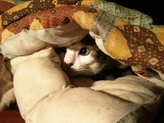 """""""A cat determined not to be found can fold itself up like a pocket handkerchief if it wants to."""" --Louis J Camuti"""