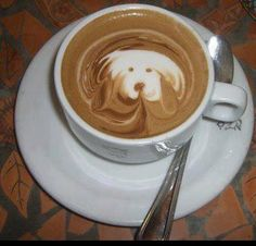 Coffee dog