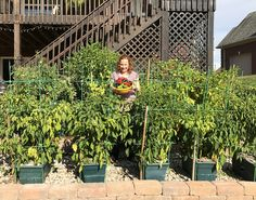 """Congratulations To Our 15th Weekly Winner Lois C., from Prospect, KY!   """"This is my 4th yr using GrowBoxes and every year my garden gets bigger!  I love my peppers - I grow everything from jalapeno, habaneros and the hottest pepper in the world - the Carolina Reaper. Everything I grow is HOT!! This year I have 70 pepper plants! I started using GrowBoxes when I moved from Cincinnati to Louisville - I didn't want to miss a growing season - and I have never gone back. My peppers LOVE GrowBoxes"""""""