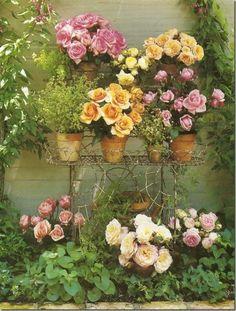 Ana Rosa / flower garden