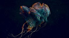 Beneath The Waves on Behance