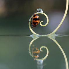 Reflejo de espiral