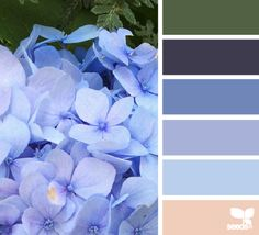 hydrangea hues - Voor meer kleur inspiratie kijk ook eens op http://www.wonenonline.nl/interieur-inrichten/kleuren-trends/