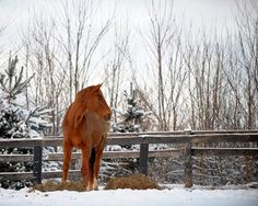 Maintaining a healthy weight and diet is just as important for our horses as it is for us.