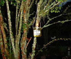 Hanging oillamp/bug repellent