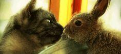 Fofo mesmo é quando duas espécies diferentes se conhecem. | 21 bichinhos fofos para você dar um tempo nas notícias ruins