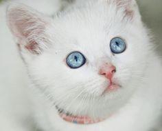 White cat by MaliaMia.deviantart.com on @deviantART
