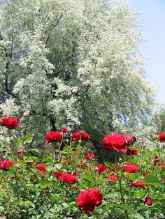 Montreal Bontanical garden, Quebec, Canada Copyright: Francois Proulx