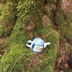 A teapot along the Teapot Hill trail in Chilliwack. Just one of 15 unusual hikes near Vancouver. Vancouver Hiking, Cheap Holiday, Photography Basics, Canada Travel, Abandoned Places, Hiking Trails, British Columbia, Family Travel, Places To Go
