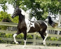 HORSES...if God made anything more beautiful...he saved it for himself :: unknown