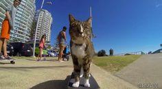Blogateira: SUSPIROS DA GATEIRA: Didga, o Gato Skatista