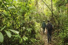 The Gap Year Blog - Into the Wild - Project of the week: Peru Amazon RainforestConservation
