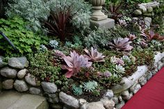 Succulent bed.