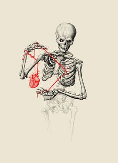 'Skeleton anatomy' by maramk Skeleton Art, Skeleton Anatomy, Arte Obscura, Anatomical Heart, Anatomy Art, Skull And Bones, Heart Art, Horror Art, Skull Art