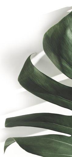 Plant Wallpaper, Tropical Wallpaper, Green Wallpaper, Nature Wallpaper, Wallpaper Backgrounds, Phone Backgrounds, Minimalist Photos, Minimalist Wallpaper, Good Vibes Wallpaper