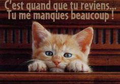 Gif Tu me manques Miss You, Jolie Images, Cute Good Morning, Photo Chat, Thought Of The Day, Cute Images, Cute Gif, Cool Baby Stuff, Love Words