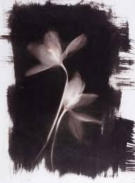 van dyke photograms - Google Search