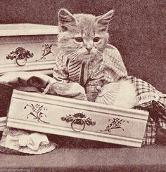 Vintage 1915 MATTED Picture Print HARRY WHITTIER FREES Animal Cat Kitten Dresser #Vintage