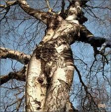 en los árboles