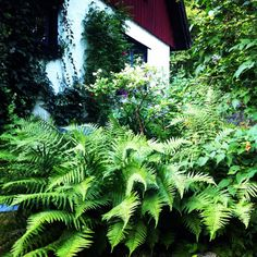 Cottagegarden Skogstorpet Sölvesborg Sweden. Scandinavian Garden, Nordic Lights, My Happy Place, All Pictures, Sweden, Woodland, Plant Leaves, Explore, Places