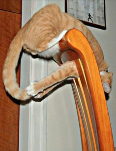 Cat Plays with His Own Tail on a Chair  ---- best hilarious jokes funny pictures walmart humor fail