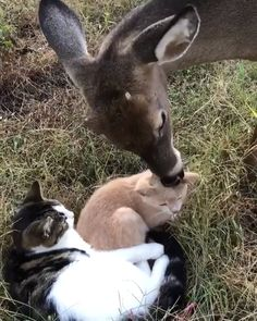 Animals are just Amazing.I truly love their unconditional love:) Cute Funny Animals, Cute Baby Animals, Animals And Pets, Cute Cats, Cute Animal Videos, Tier Fotos, Cute Creatures, My Animal, I Love Cats