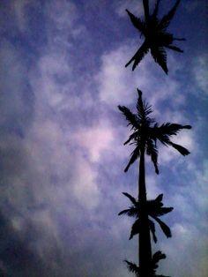 20140102 抬頭 看到樹,與樹後面的 還有更後面的