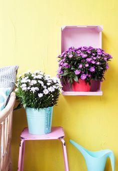 Astern im Happy Life Trend! #pflanzenfreude