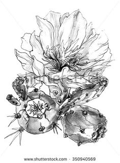 Tropical cactus flower in blossom. Botanical hand drawn watercolor black and white monochrome illustration for greeting cards, invitations, and other printing projects.