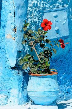 Travel Inspiration for Morocco - Kasbah des Oudaias,blue walls protect from evil spirits, Rabat, Morocco