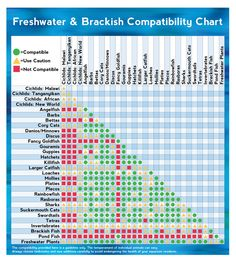 Community Fish Compatibility Chart