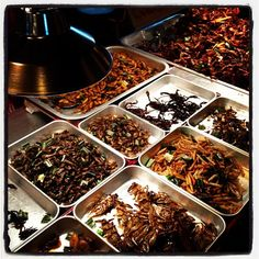 Eating bugs on Khaosan Road in Thailand