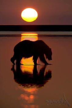 .bear