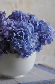from ruemag >> Hydrangea - a plant I have been unable to master....and simply adore the blooms....very royal in blue....