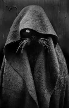 Jedi Cat Black Cat - Photography by Audrey Baschet. Animals And Pets, Funny Animals, Cute Animals, Baby Animals, Crazy Cat Lady, Crazy Cats, I Love Cats, Cool Cats, Image Chat