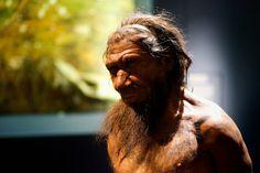 ¿Por qué se extinguieron los neandertales?