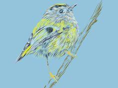 Bird Sketch #sketch #bird