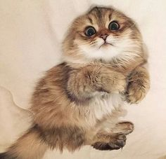TOP 45 lustige Katzen Bilder – Rebel Without Applause Cute Baby Animals, Animals And Pets, Funny Animals, Bizarre Animals, Easy Animals, Funny Horses, Animal Babies, Animals Images, Cute Cats And Kittens