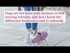 Keep your dog safe on the road Super Cute Dogs, Bad News, German Shepherd Dogs, Pup, Things To Think About, Projects, Log Projects, Blue Prints, Dog Baby