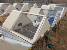 Super Great A-frame Rabbit Hutch!