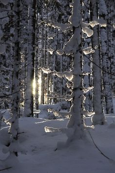Beautiful winter scene.