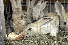 15 part series on keeping rabbits