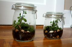 terrariums for the science area