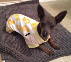 Meet Javier, a Petfinder adoptable Xoloitzcuintle (Mexican Hairless) Dog | Fort Worth, TX | Little Javier has stolen the hearts of his rescuers for sure! He was rescued from the urgent list...